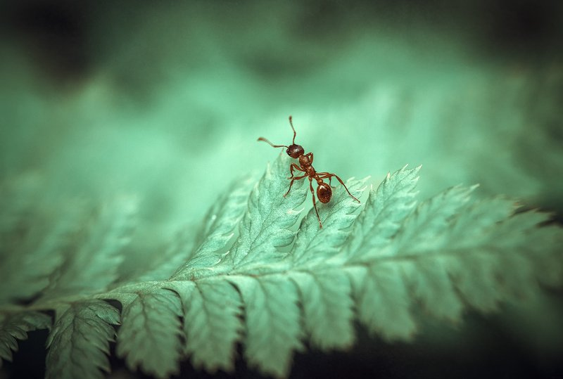 Путешествие муравья...photo preview