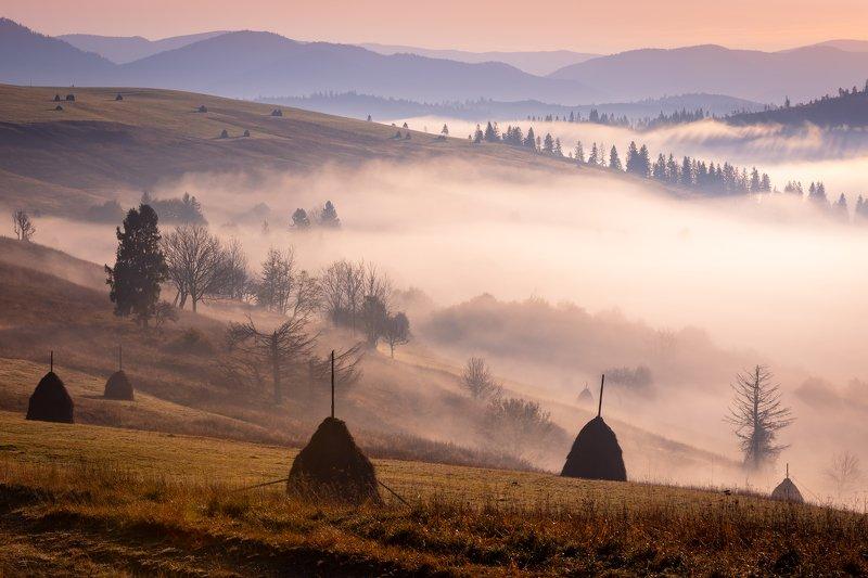 карпаты. осень. туман. рассвет Карпаты. Розовый рассвет в долинеphoto preview