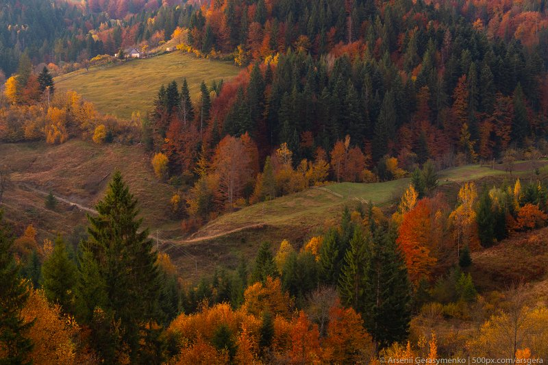 hut, carpathians, carpathian mountains, pasture, countryside, mood, tranquil, houses, wooden, rural, mountains, foliage, wonderland, land, meadow, field, scenic, fall, background, tree, outdoor, forest, color, colorful, alpine, hill, scenery, yellow, coun Village Houses and autumn foliage trees in the mountains. Meadow and forest in the carpathian mountainsphoto preview