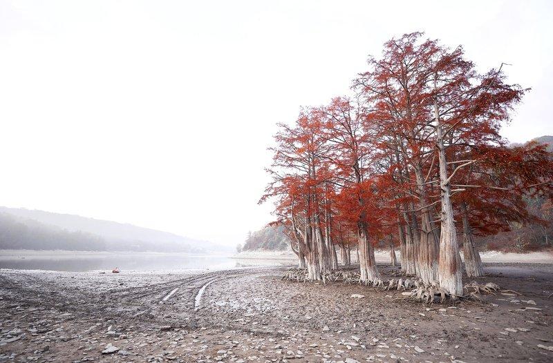 Кипарисовое озероphoto preview