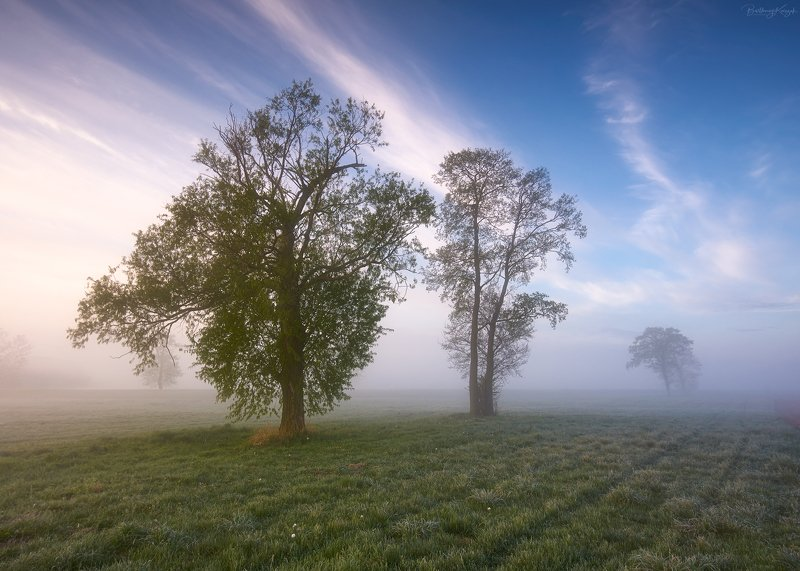 morning, spring, fog, trees, nature photo preview