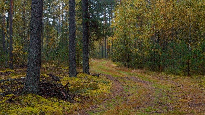 Прогулка по осеннему лесуphoto preview