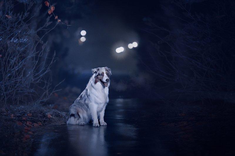 Ночная сьемкаphoto preview
