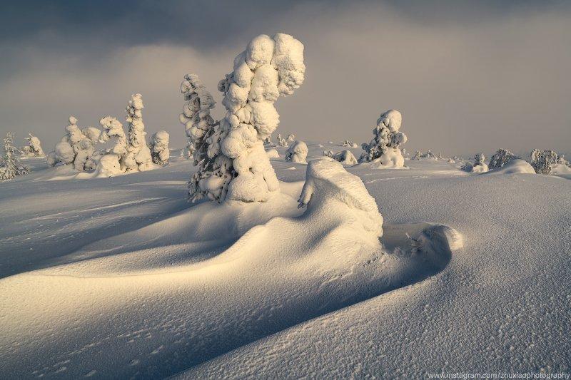 Россия Лес зимойphoto preview