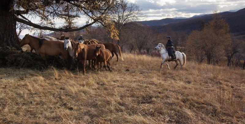 Монголын Салхи - ветры Монголииphoto preview