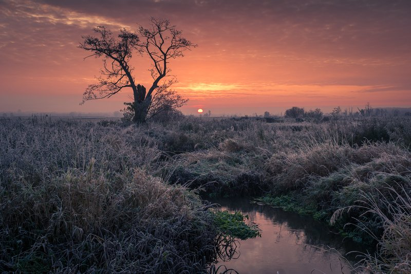landscape, frozen, morning, nature, tree, river, water, sunrise, sun, clouds, Morning on the Rzadza Riverphoto preview