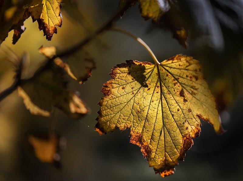 природа, макро, осень, листья желтые Желтая прессаphoto preview