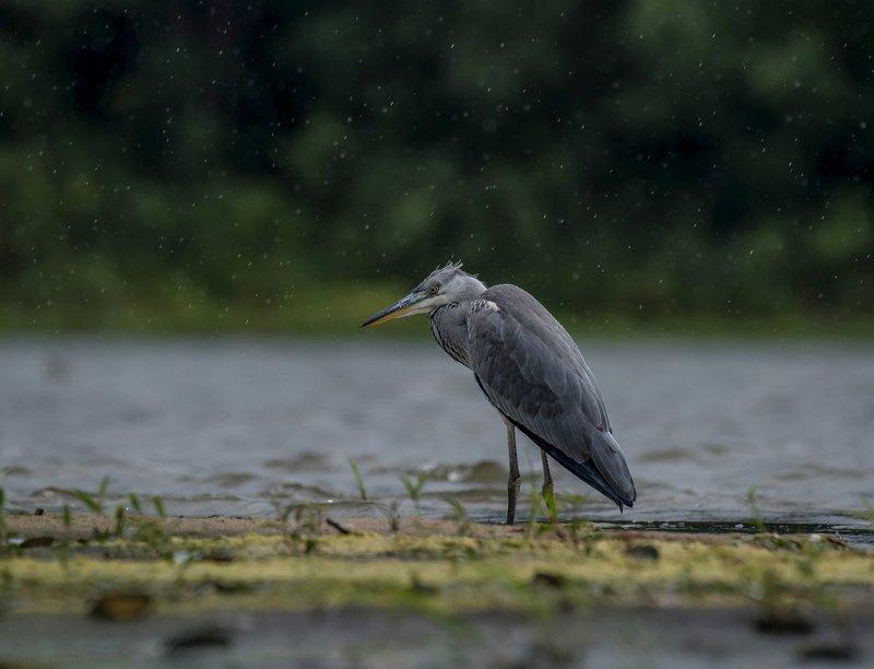 птицы,природа, лето Дождьphoto preview