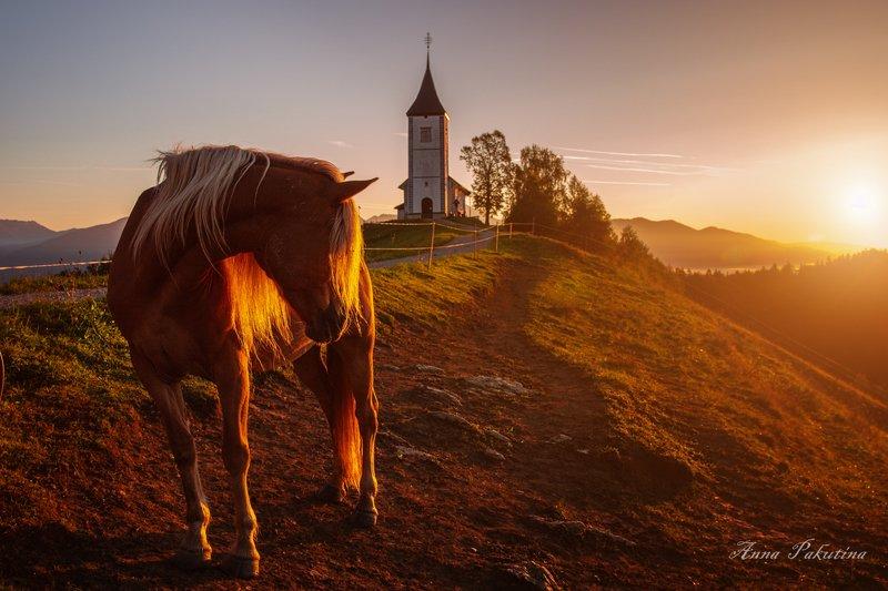 На утреннем солнышке (Ямник, Словения)photo preview