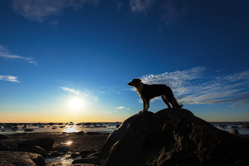 bordercollie, sunset, dog Joyphoto preview