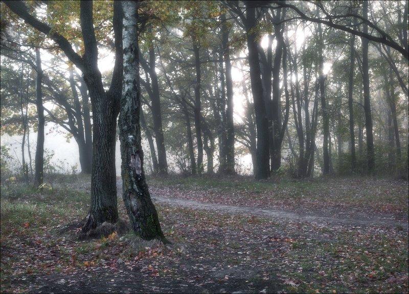 утро, осень, дымка, Осеннее утроphoto preview