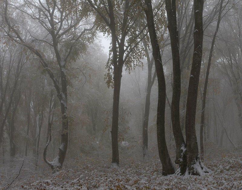 первый снег, кизиловка, кабардино-балкария Первый снегphoto preview