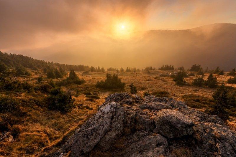 landscape, tree, sunset Magic Eyephoto preview