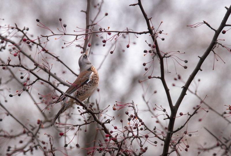 природа, лес, животные, птицы За ягодкойphoto preview