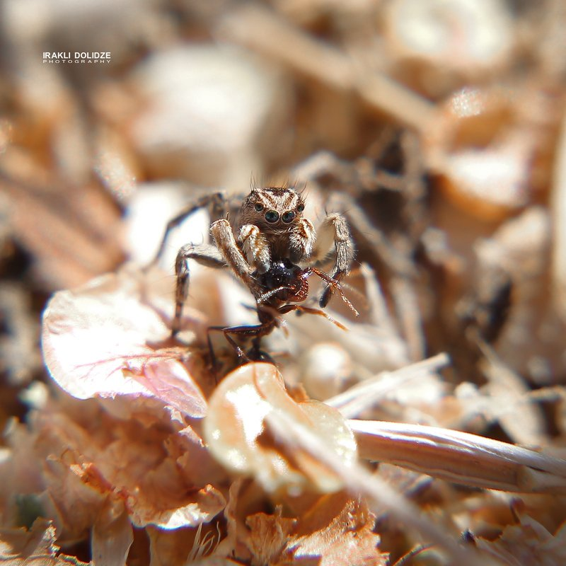 spider, ant, launch, eating, nature, outdoor, close-up, macro, photography Launchphoto preview