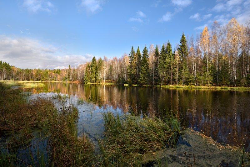 осень,река,листья,небо,облака,лес,отражение осенний пейзажphoto preview