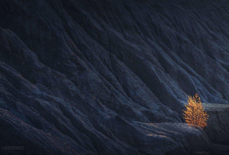 дерево, осень, карьер, тульская область, романцевские горы Факелphoto preview