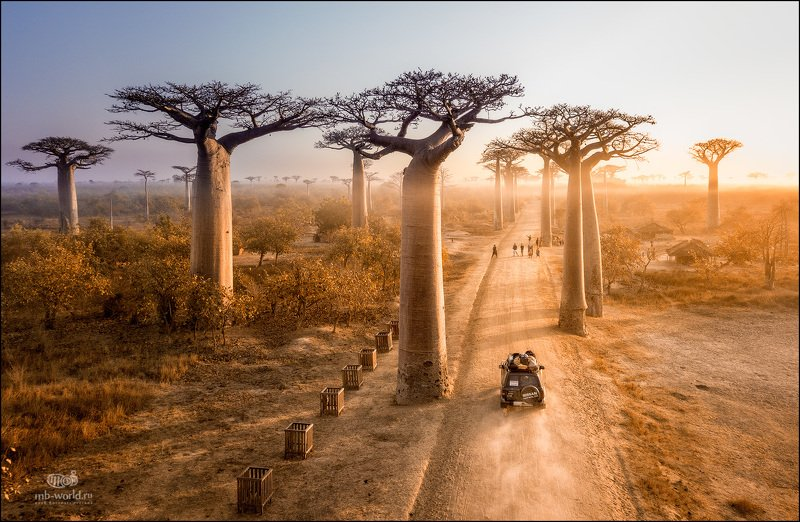 Мадагаскар, баобабы, аллея, пейзаж, фотопутешествие Аллея баобабовphoto preview
