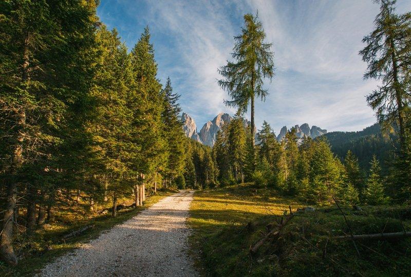 Лесной пейзажphoto preview