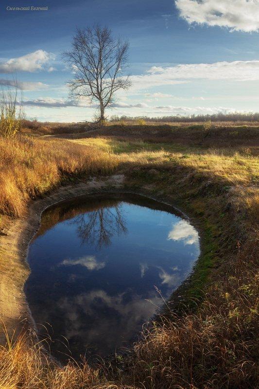 осень, поле, лужа, отражение, дерево, день Лужицаphoto preview
