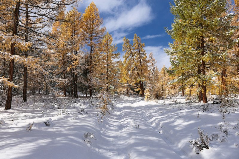 По первому снежкуphoto preview