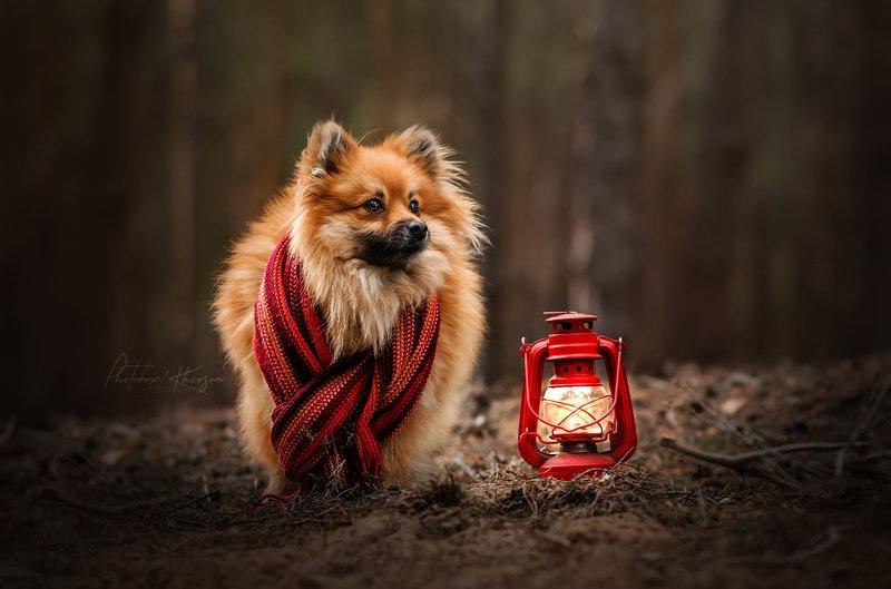 собака, анималистика,  лес, портрет В лесуphoto preview