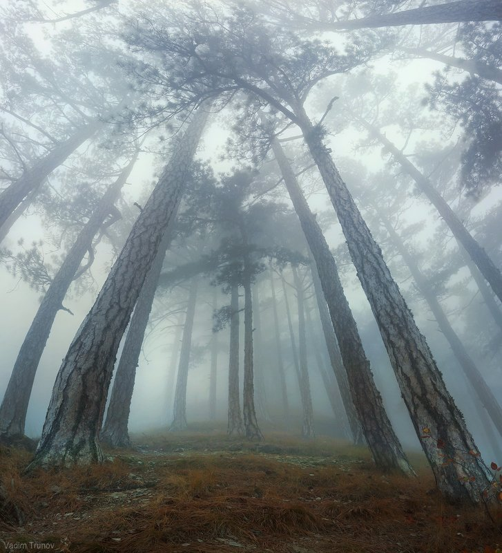 Туманный лес Ай-Петриphoto preview