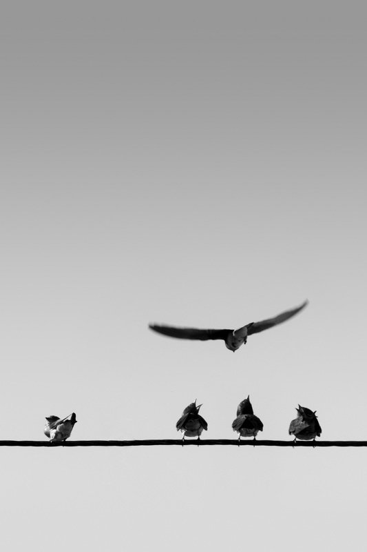 mohib ali photography Bird Will Emigrate photo preview