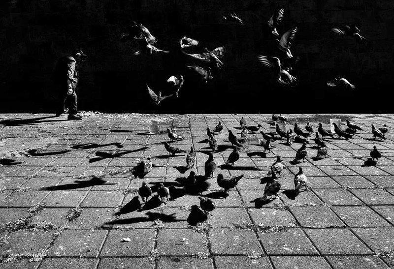 Birdsphoto preview