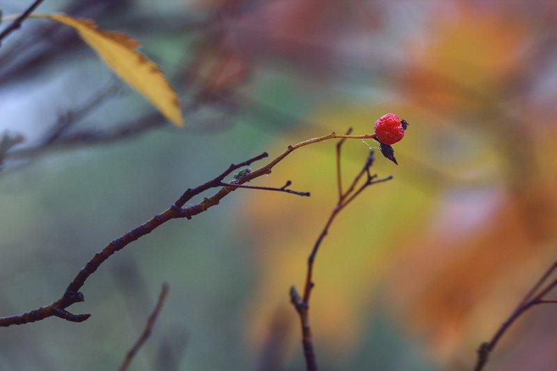 юпитер-37а, manual lens, мануальная оптика, beautiful, красивый, moment, момент, nature, природа, осенний, autumn, осень, berry, ягода, red, красная, branch, ветка, fog, туман, Яркая искорка в туманной безмятежности…photo preview