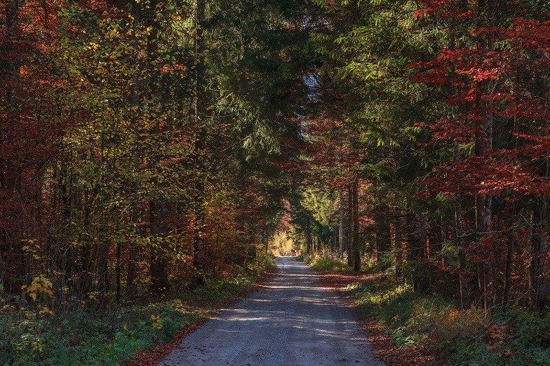 Лесные зарисовкиphoto preview