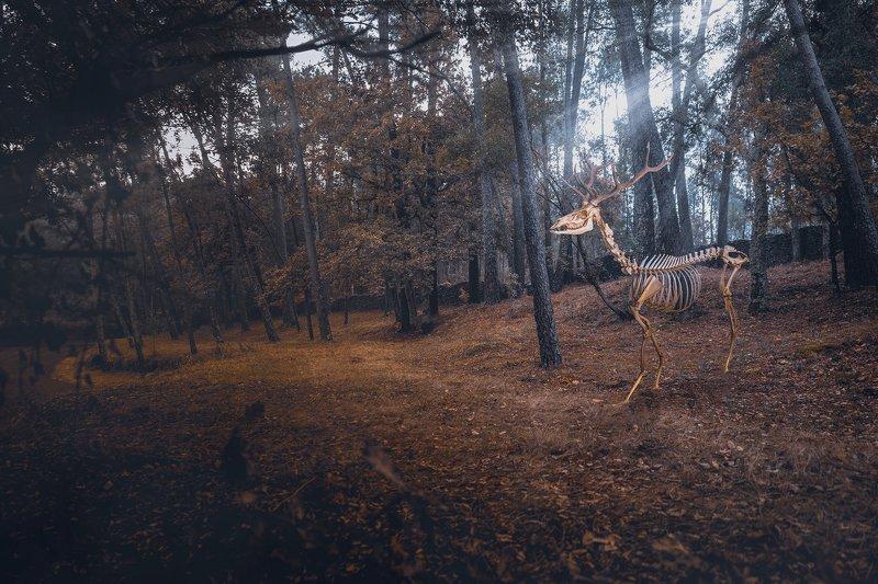 conceptual, nature, earth, planet, animals, forest, envoirenment Extinctionsphoto preview