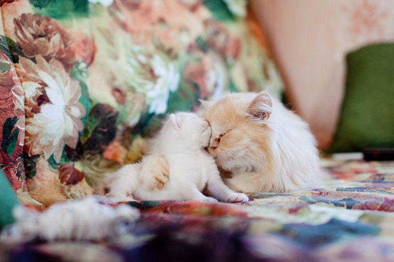 кошки Lovephoto preview