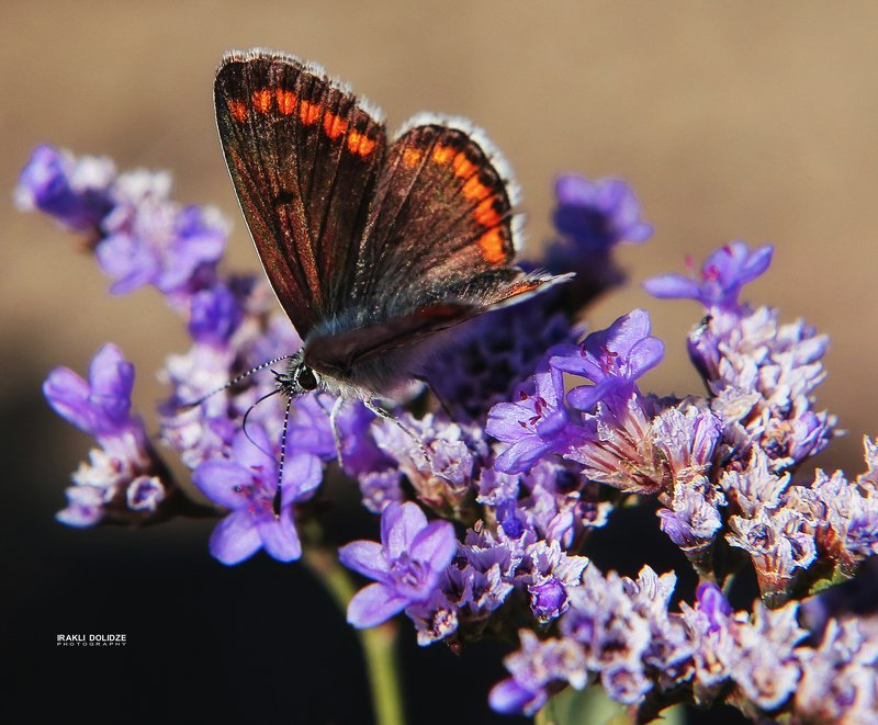 butterfly, flower, macro, close-up, nature Coloursphoto preview