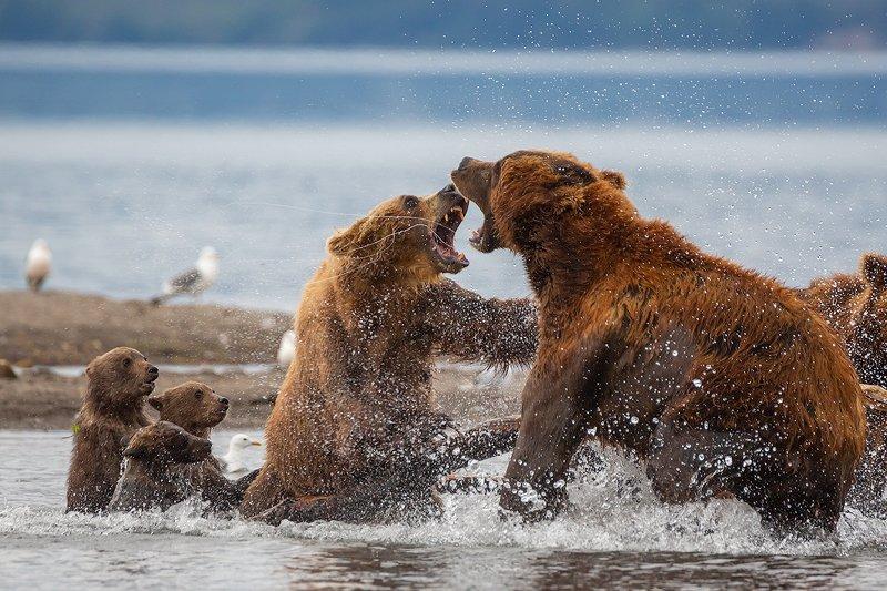 природа озеро камчатка путешествие лосось заповедник медведь рыба Защищая детейphoto preview