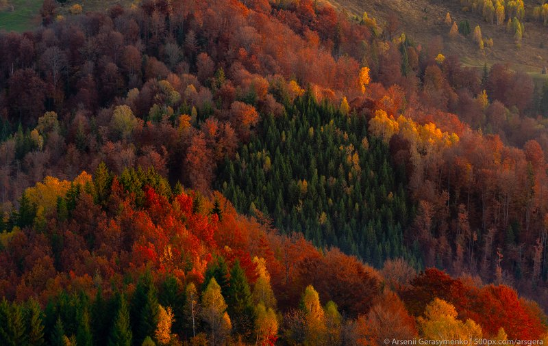 autumn, carpathians, carpathian mountains, pasture, countryside, mood, tranquil, houses, wooden, rural, mountains, foliage, wonderland, land, meadow, field, scenic, fall, background, tree, outdoor, forest, color, colorful, alpine, hill, scenery, yellow, c Autumn forest trees in the mountains panorama trees in the Carpathian mountainsphoto preview