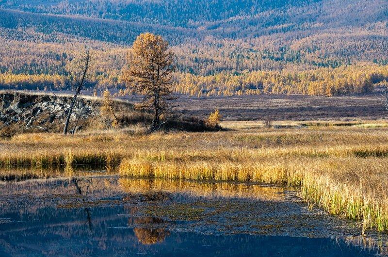 горы, алтай, горный алтай, солнце, утро, озеро, джангысколь, ештыкёль, урочище, отражение, , Утро на Джангысколе.photo preview