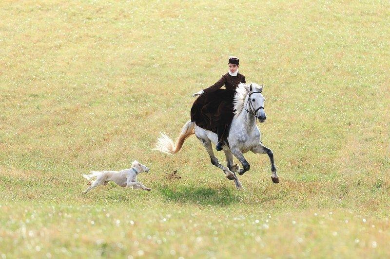 охота 19 век, лошади В поляхphoto preview