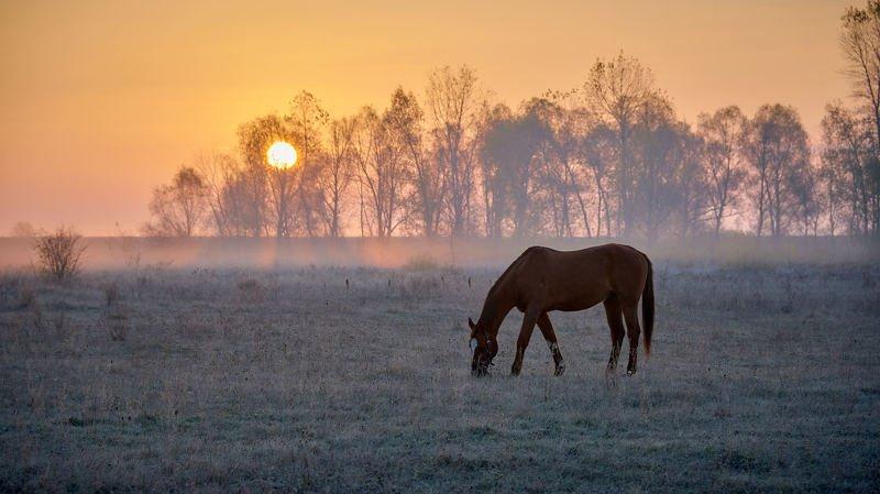 Autumn frozen morning...photo preview