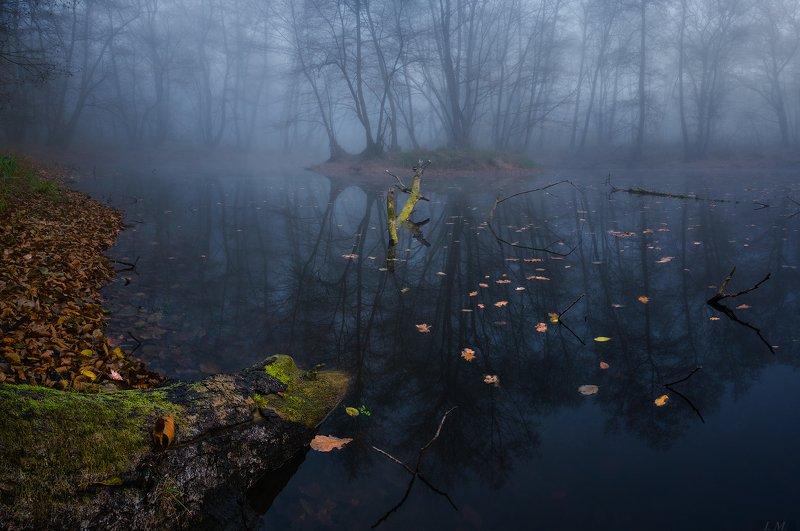 болото, лес, осень, пейзаж, туман, тишина, утро, пейзажная фотография, trees, misty, colors, landscape photography, foggy, swamp, autumn, blue, cold, fall, fog, forest, landscape, light, mood, silence, water мертвая тишина ..photo preview