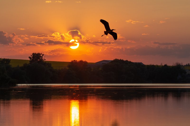 sunset bird landscape outdoors water lake reflections Heron in the skyphoto preview