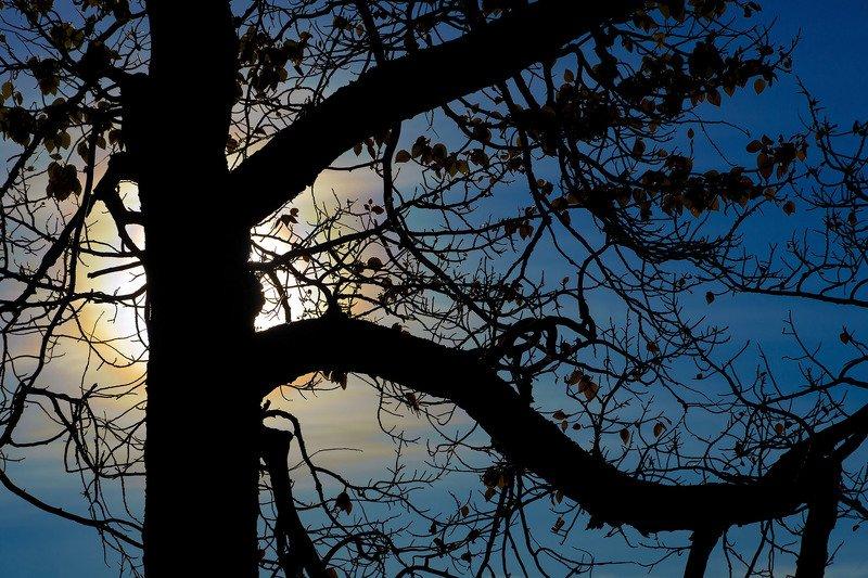 алтай, кызылчин, марс, осень, солнце, тополь, природа Тополя на Кызылчинеphoto preview