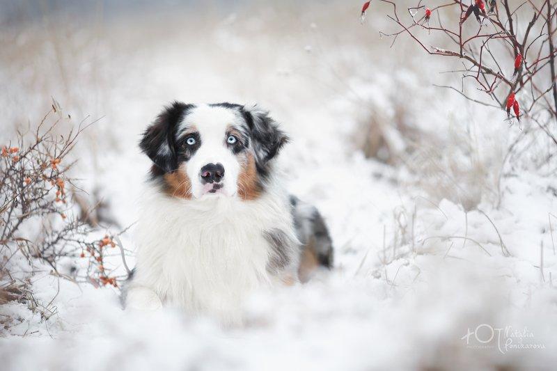 Зимний Анис.photo preview