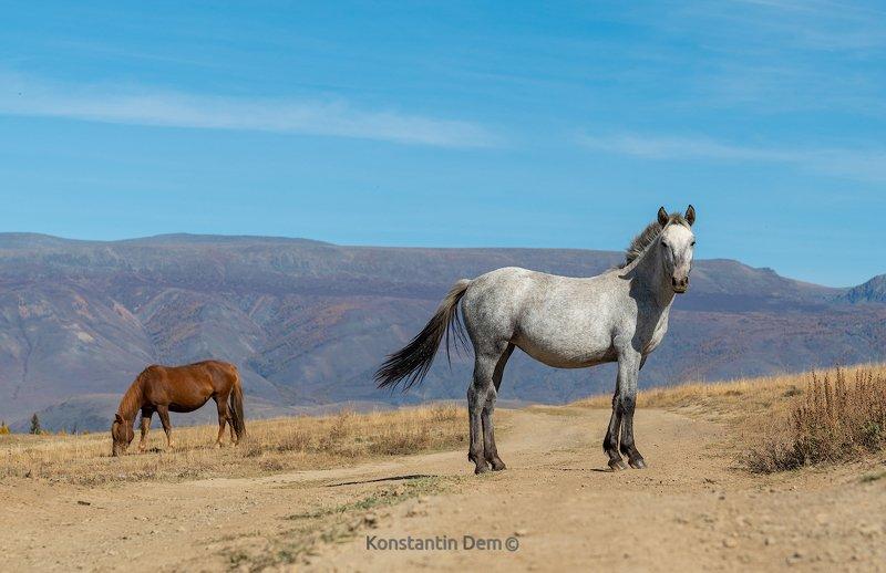 Алтайские лошадкиphoto preview