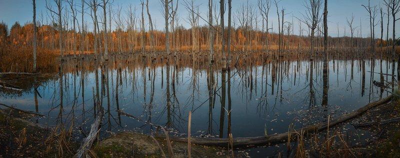 Мертвый лес.photo preview