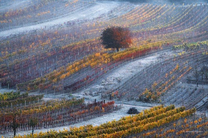 пейзаж, моравия, осень, рассвет, утро, иней Дыхание зимы...photo preview