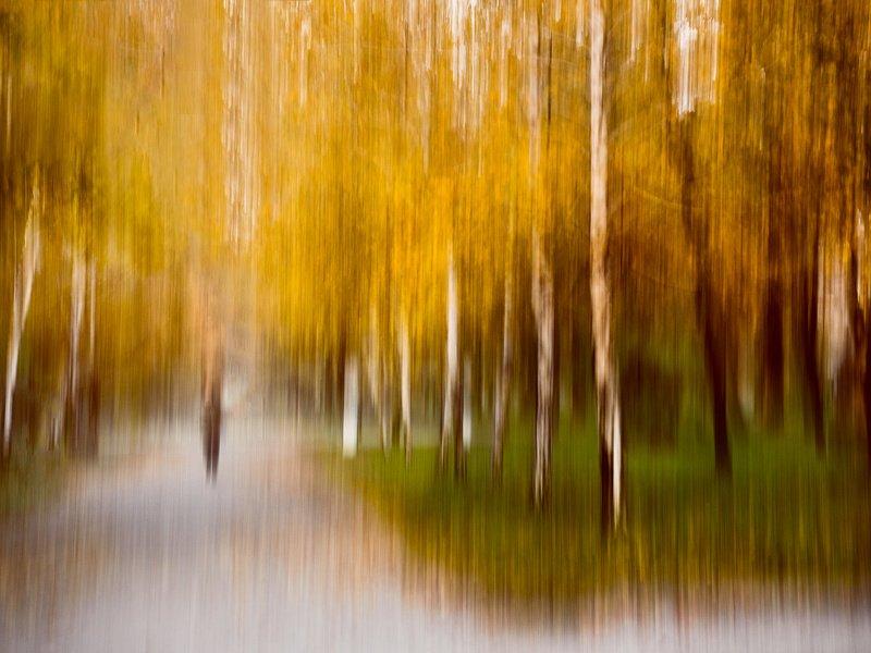 Осенний ноктюрн, исполняемый ветром, плывёт в тишине золотистых аллей...photo preview