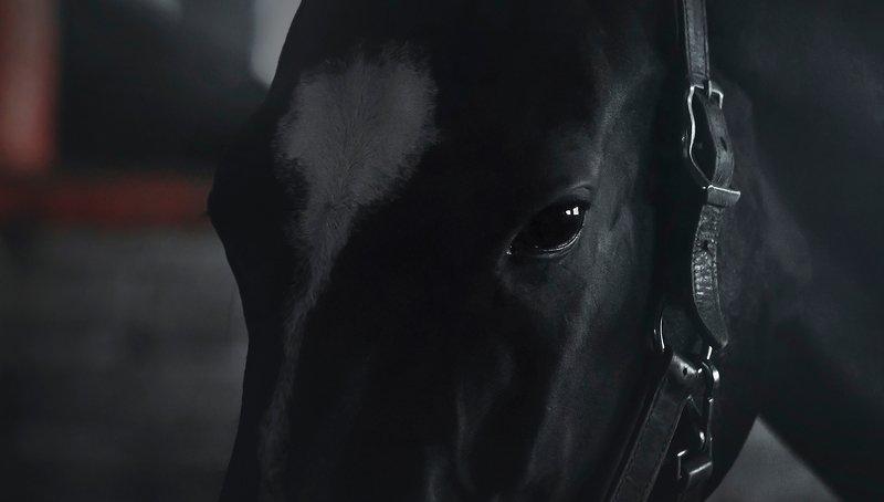 akhal-teke, horse Patshaiymphoto preview