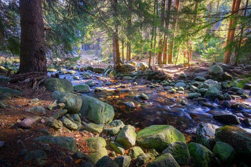река, лес, солнце, осень Горная рекаphoto preview
