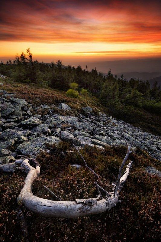 landscape, tree, sunset, panorama Evening under Kralický Sněžníkphoto preview